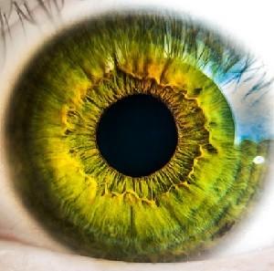 視覚トレーニング 人生を変える 習慣